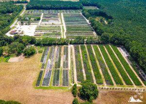 virginia-tree-farm